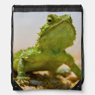 Endemic Male Namaqua Agama In The Sunlight Drawstring Bag