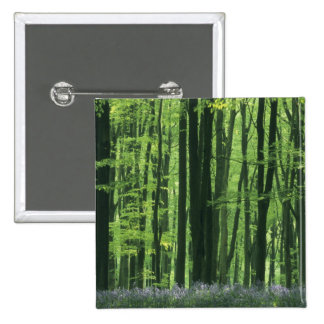 England, Beech forest & Bluebells 15 Cm Square Badge