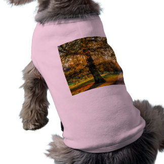 England in Autumn Shirt