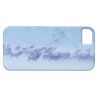 England iPhone 5 Covers