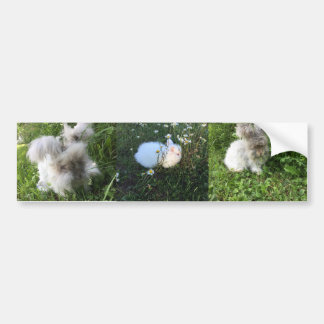 English Angora Three Bunny Bumpersticker Bumper Sticker