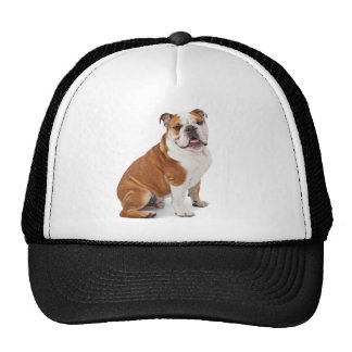 English British Bulldog Cap