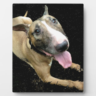 English Bull Terrier 8 x 10 with Easel Plaque