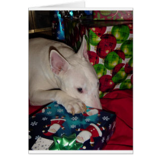 english bull terrier christmas present greeting card