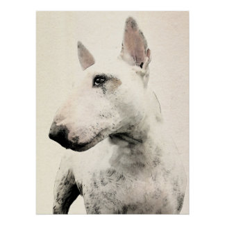 English Bull Terrier Dog Poster