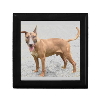 English Bull Terrier Gift Box