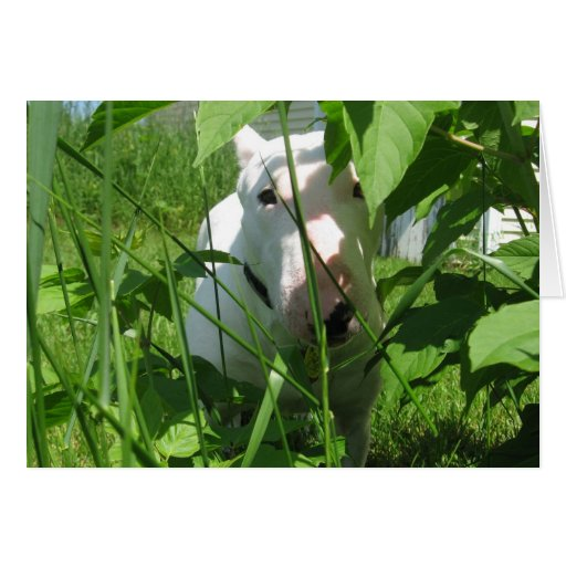 English Bull Terrier Peeking Through the Leaves Greeting Card