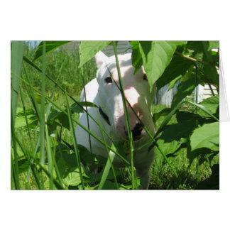 English Bull Terrier Peeking Through the Leaves Greeting Card