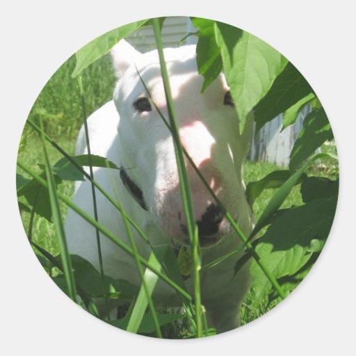 English Bull Terrier Peeking Through the Leaves Round Stickers