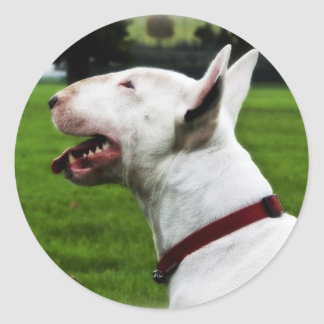 English Bull Terrier Round Sticker