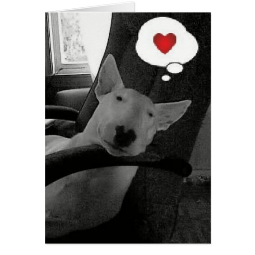 english bull terrier valentine greeting cards