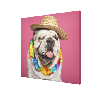 English Bulldog (18 months old) wearing a straw Canvas Print