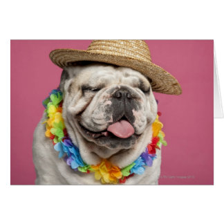 English Bulldog (18 months old) wearing a straw Card