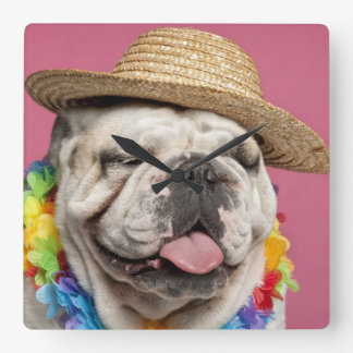 English Bulldog (18 months old) wearing a straw Square Wall Clock