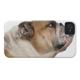 English Bulldog (6 years old) iPhone 4 Cover