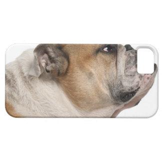 English Bulldog (6 years old) iPhone 5 Cover