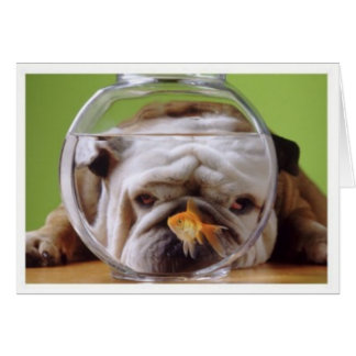 English Bulldog Card