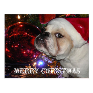 English Bulldog Christmas Postcard