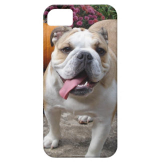 English Bulldog Cute Funny iPhone 5 covers cases