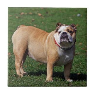 English Bulldog dog beautiful tile or trivet, gift