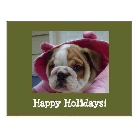 English Bulldog Happy Holidays Postcards