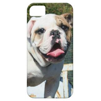 English bulldog iPhone 5 cover