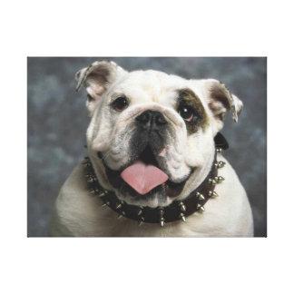 English Bulldog Premium Wrapped Canvas Canvas Prints