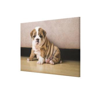 English bulldog puppies canvas print