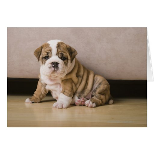 English bulldog puppies greeting card