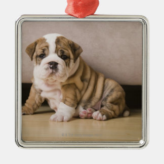 English bulldog puppies christmas ornament