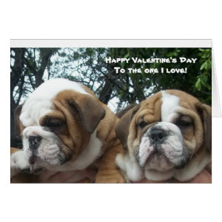 English bulldog puppies Happy Valentine's Day card