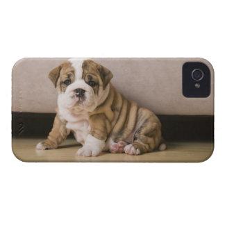 English bulldog puppies iPhone 4 Case-Mate case