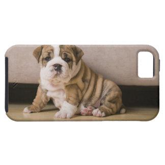 English bulldog puppies iPhone 5 case