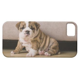 English bulldog puppies iPhone 5 cover