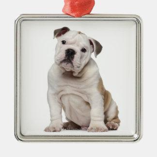 English bulldog puppy (2 months old) christmas ornament