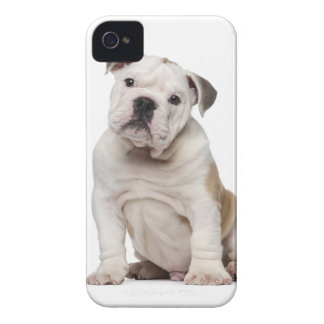English bulldog puppy (2 months old) iPhone 4 cover