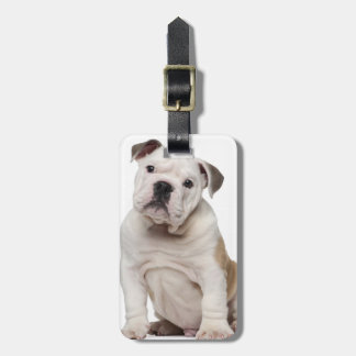 English bulldog puppy (2 months old) luggage tag