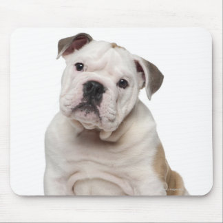 English bulldog puppy (2 months old) mouse mat