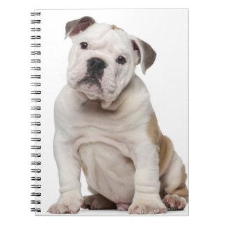 English bulldog puppy (2 months old) notebooks