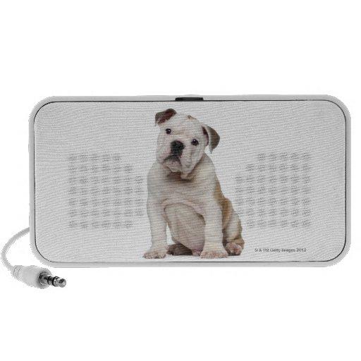 English bulldog puppy (2 months old) mp3 speaker