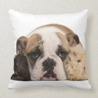 English bulldog puppy 4 months old and two guine throw pillow