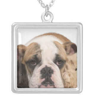 english bulldog puppy (4 months old) and two custom necklace