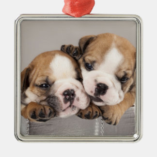 English Bulldog puppy and gifts Christmas Ornament