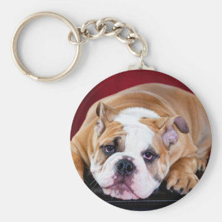 English bulldog puppy basic round button key ring