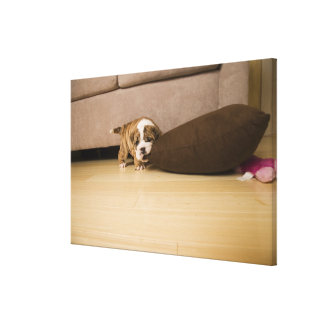 English Bulldog puppy biting pillow Canvas Print
