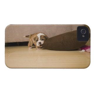 English Bulldog puppy biting pillow iPhone 4 Case-Mate Cases
