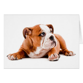 English Bulldog Puppy Blank Note Card