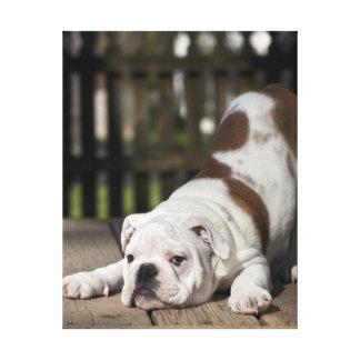 English Bulldog Puppy Canvas Print