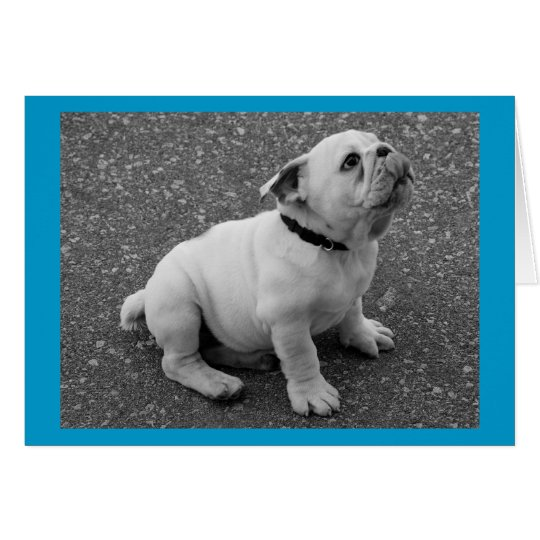 English Bulldog Puppy Dog Blank Greeting Note Card