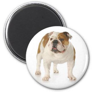 English Bulldog Puppy Dog Magnet